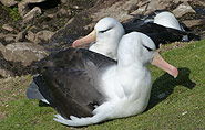 Albatros, arctic-travels.com