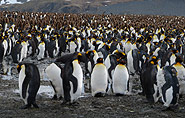 Ku006e00690067spinguine, arctic-travels.com