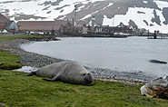 South Georgia, Grytviken,arctic-travels.com